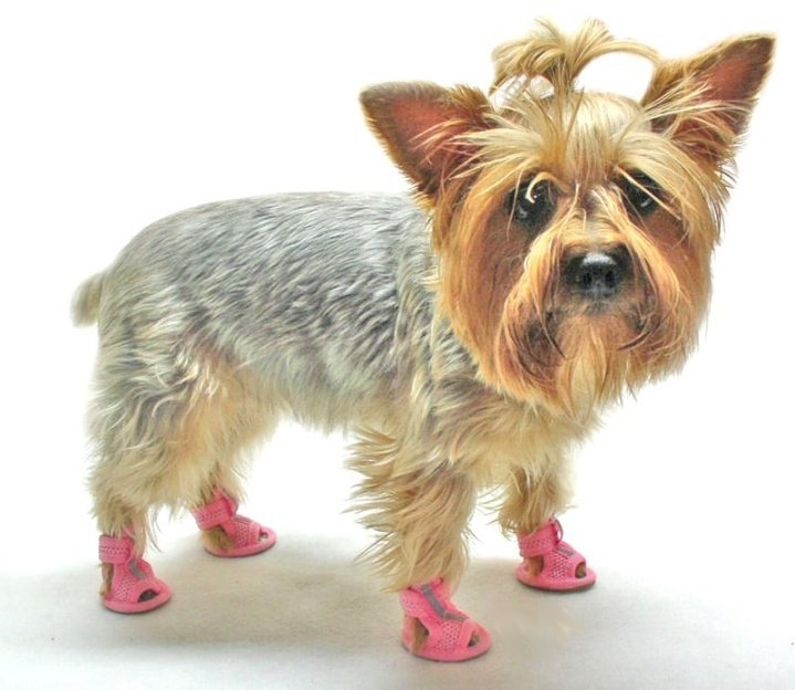 Dog Sandals For Summer Paw Protection | Alldogboots.c