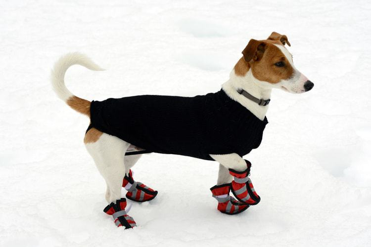 The 50 Best Dog Boots of 2020 - Pet Life Tod