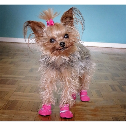 Tiny Dog Boots